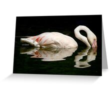Flamingo Rose! Greeting Card