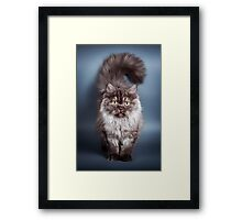 Fluffy black cat Framed Print
