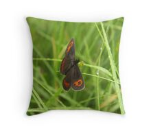 Scotch argus butterfly Throw Pillow
