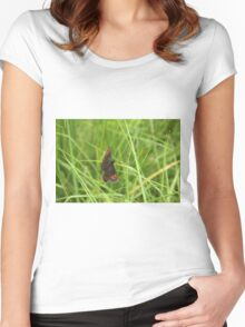 Scotch argus butterfly Women's Fitted Scoop T-Shirt