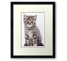 Cute gray kitten Framed Print