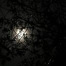 Moonlight silhouettes by citrineblue