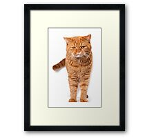 Big red cat Framed Print