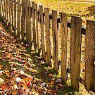Autumn Fence by Carlos Restrepo