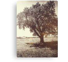 The Old Rock Elm  Canvas Print