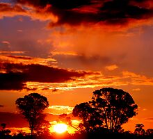 Sunset on the Northern Plains by Clive