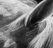 Cassia - Hanoverian Dressage Stallion Sticker
