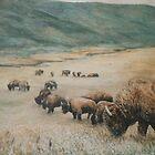 Buffalo on the plains by Dan Budde