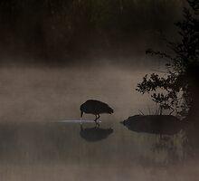 Black-crowned Night heron by Jim Cumming