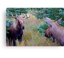 Moose couple Canvas Print