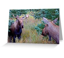 Moose couple Greeting Card
