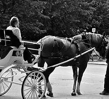 The Horse Whisperer by Craig Blanchard