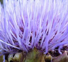 Soft and Spikey by Orla Cahill Photography