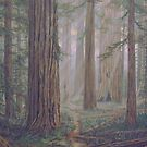 Redwoods by Dan Budde