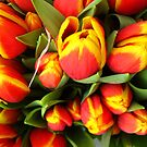 Tulips by Orla Cahill Photography