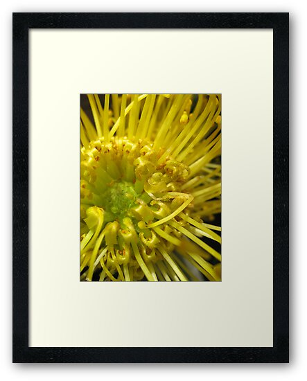 Spikey Yellow by Orla Cahill Photography