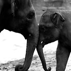 Mother & Baby.. by stellaozza