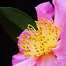 camillia at night by ANNABEL   S. ALENTON