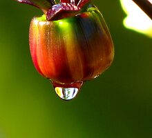 Just A Drop! by swaby