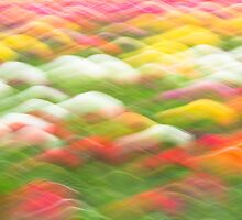 Spring Tulip Abstract by Craig Sterken