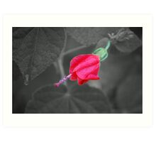 Red Turk's Cap #2 SC Art Print