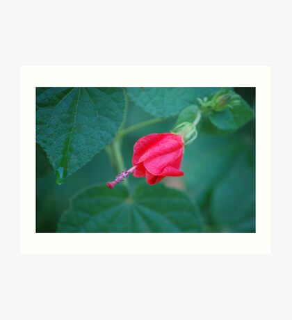 Red Turk's Cap #1 Art Print