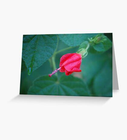 Red Turk's Cap #1 Greeting Card