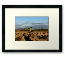 New Life - Dangars Lagoon, NSW, Australia Framed Print