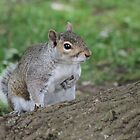 A Friend in the park. by kenmay