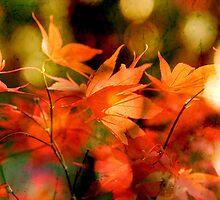 Autumn Glow by Natasha Bridges