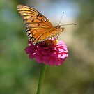 Viceroy on a Zenia by WTBird