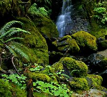 So green... by Allan  Erickson