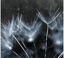 Fireworks by Natasha Bridges