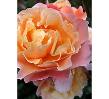Tissue Crunch Rose Photographic Print