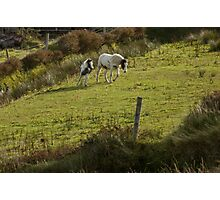 horses on dingle peninsula Photographic Print