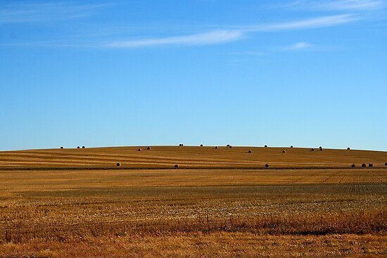 Counting the Dots, Saskatchewan by Vickie Emms