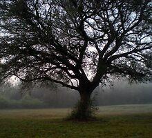 Blue Tree by Jeffri