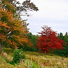 Vermont Roadside Color by Deborah  Benoit