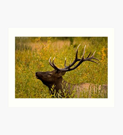 Bull Elk in Brush Art Print