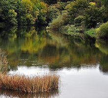 Boyne River in Autumn by Martina Fagan