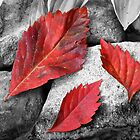 Red Leaves by Cassy Greenawalt