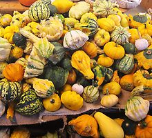 Gourd and Squash by Detlef Becher