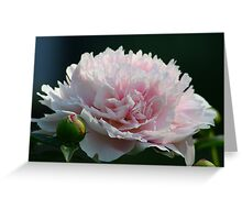 First Peony Greeting Card