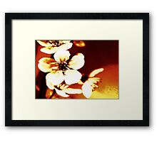 Oriental Blossom/Great White Cherry Abstract by Jenny Meehan Framed Print