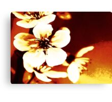 Oriental Blossom/Great White Cherry Abstract by Jenny Meehan Canvas Print