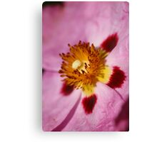 Spring to life Canvas Print