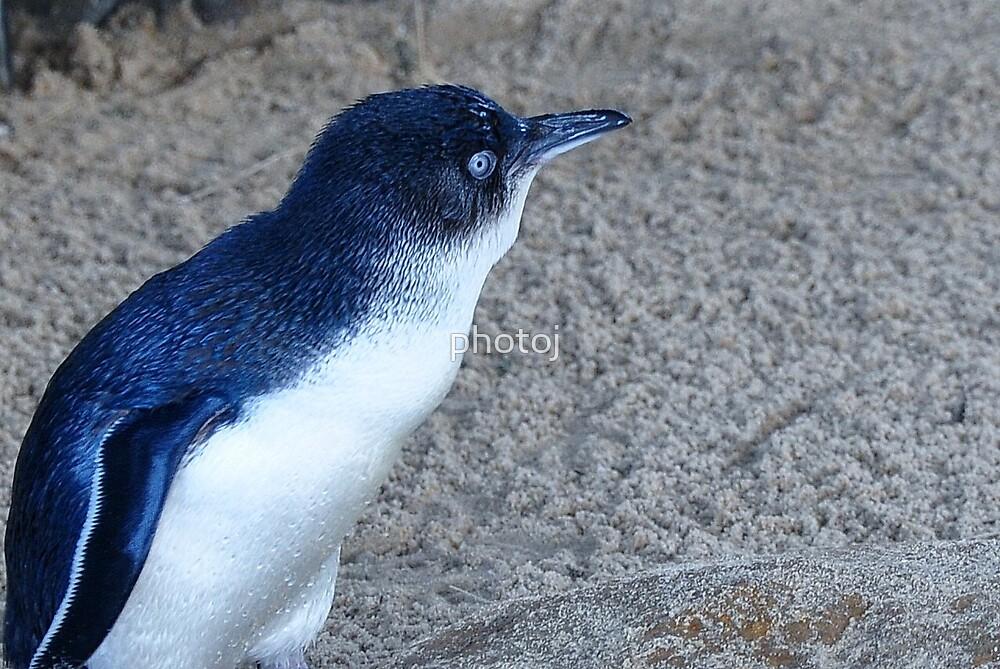 photoj Tas Penguin by photoj