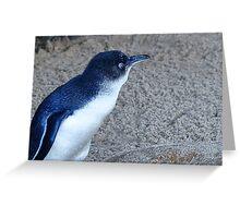 photoj Tas Penguin Greeting Card