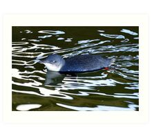 photoj Penguin Art Print