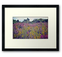 Pink summer heather Framed Print